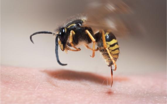 Insectenbeten: vervelend en soms gevaarlijk !